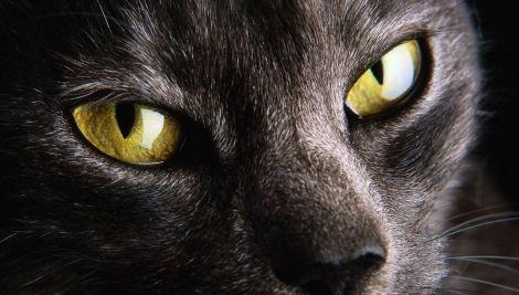 eyecat_02